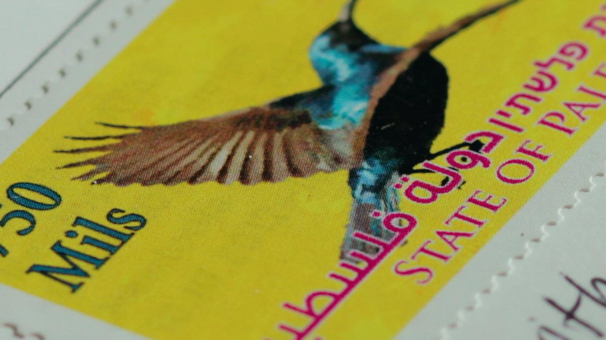 Palestine-Sunbird